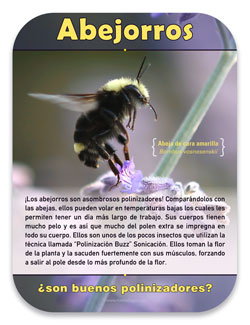 Pollinator Habitat Bumble Bee