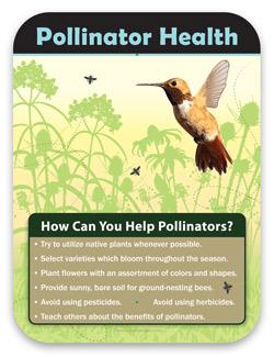 Pollinator Habitat Bees Butterflies Birds